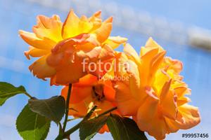 Fotolia_99957456