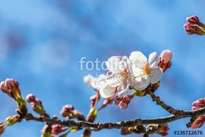 Fotolia_136712676